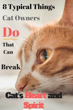 8 Typical Things Cat Owners Do That Can Break a Cat's Heart and Its Spirit …