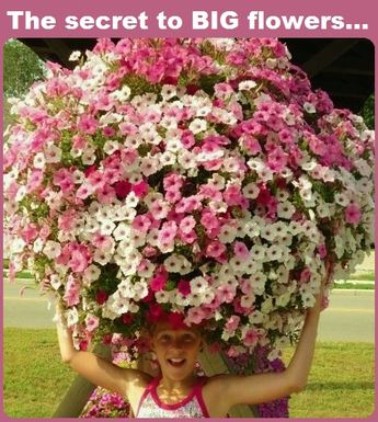 Want beautiful flowers this year? The secret is at www.BeatYourNeighbor.com