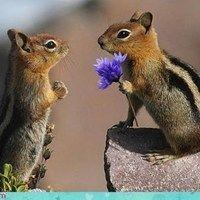 Chipmunk Love