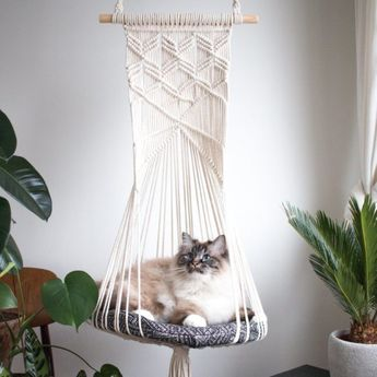 Cat hammocks – what every owner should know