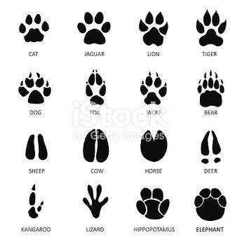 Animals footprints white background