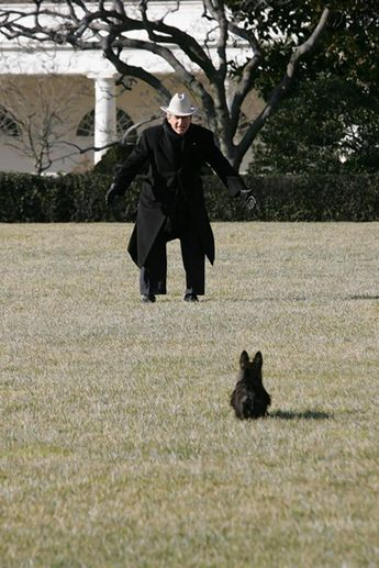 Miss Beazley, Second Dog under George W. Bush, has died in Texas - NY Daily News