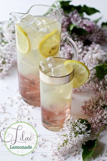 Lilac lemonade is a refreshing floral twist on summer lemonade. By adding lilac simple syrup to a glass of fresh lemonade you have added another lovely layer of flavor and fragrance to a refreshing summer beverage. #lilac #lemonade #summerlemonade #lilacsyrup #summerdrink #homemadelemonade