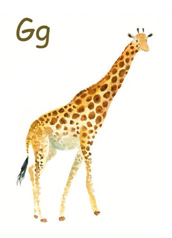 ALPHABET ANIMAL G for Giraffe by DIMDImini 5x7 Print