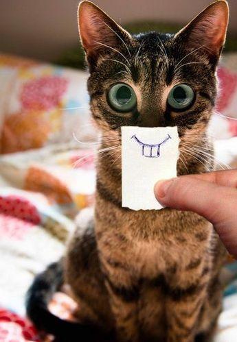 """Relacion exitosa gato-humano. Simpatiquisimo juego. El """"ojazos"""" se muestra tranquilo y motivado, prestando atención y el humano ha desarrollado con él su creatividad."""
