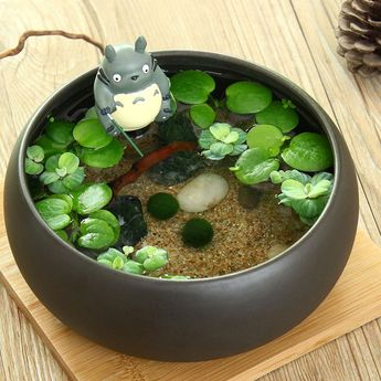 Marimo algae ball miniature landscaping plant ideas potting eco bottle water tank DIY plant pot oculata