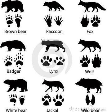 Wild animals stock vector. Illustration of silhouette - 23662170