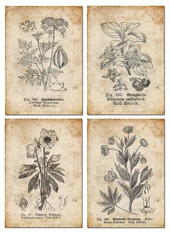 Vintage Botanical floral, plants, Old paper, drawing , set of 4 - digital download