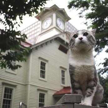 Nyankichi NoranekoさんはInstagramを利用しています:「俺と札幌市時計台😸 #猫 #cat #고양이 #แมว #貓 #кошка #qata #chat #ニャンスタグラム #gato #喵星人 #ねこ部 #旅猫 #動物 #野良猫 #ニャン吉 #japan #猫写真 #ねこ #ネコ #旅貓 #貓写真 #札幌市 #札幌 #北海道…」