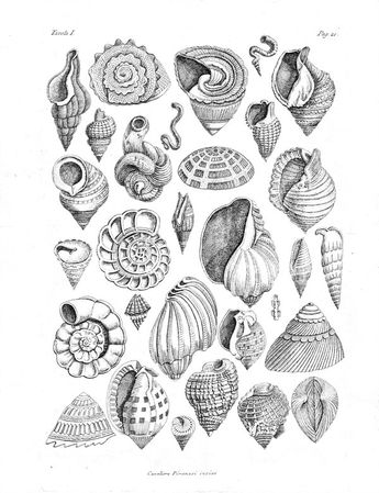 Today's #ColourOurCollections Various shells taken from the real by Giovanni Battista Piranesi #ColorOurCollections