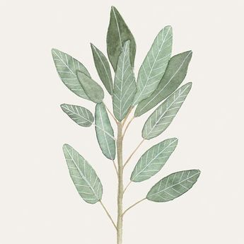A reminder that Society 6 has free worldwide shipping until March 6! This sage beauty is available as an art print or an iPhone case (and will give you wisdom on all your phone calls ). Click the link in my profile to get the deal!