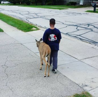 What This Little Boy Is Doing to Keep a Blind Deer Alive Will Touch Your Heart