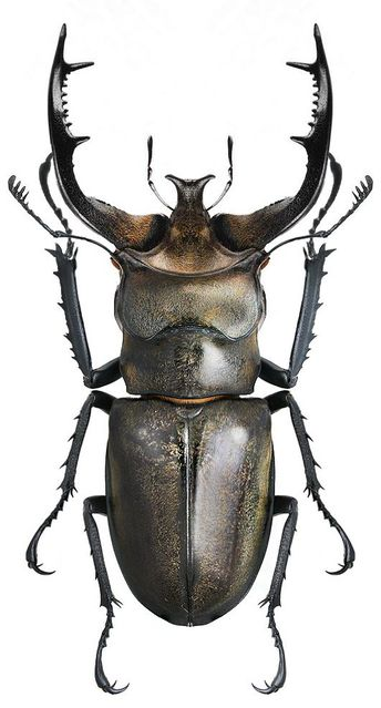 Top 10 Different Types of Beetles