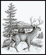 Recently Shared Woodburning Patterns Easy Wood Burning Projects