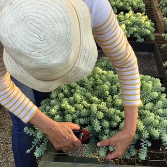 How to Propagate Your Succulents Successfully