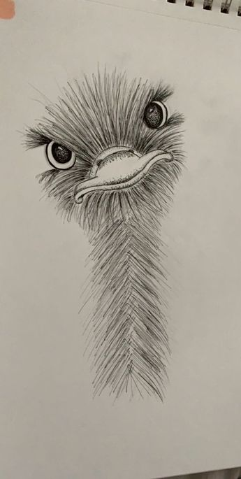 little ostrich friend :) #art #animalart #drawing #sketch - #animalart #Art #Drawing #friend #ostrich #Sketch #zeichnung