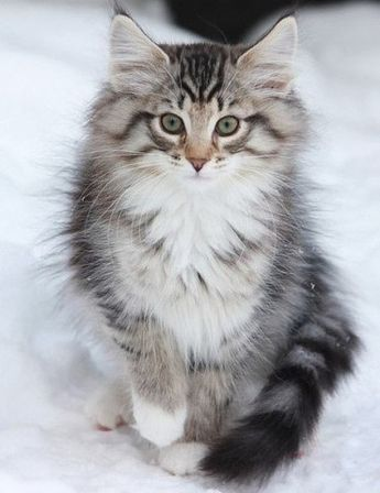 TOP 35 Cats and Kittens Pictures