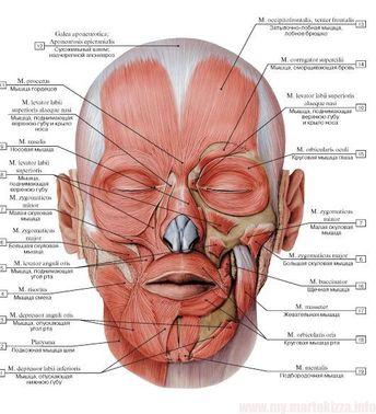 vmede.org sait? page = 4 & id = Anatomija_bili4_t1 & menu = Anatomia_bili4_t1 - #amp #anatomia #Anatomiabili4t1 #anatomija #Anatomijabili4t1 #bili4 #id #menu #Page #sait #vmede #vmedeorg - My MartoKizza