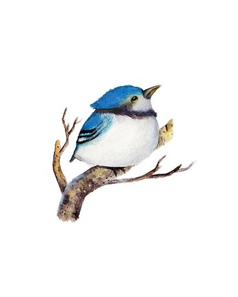 Baby Blue Jay instant download and printable by OneWildKingdom, $6.00