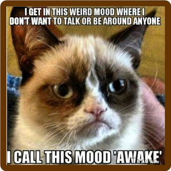 Details about Funny Grumpy Cat Mood Awake Refrigerator Magnet
