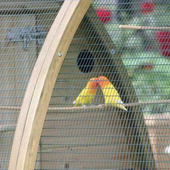 The Arch House Bird Aviary