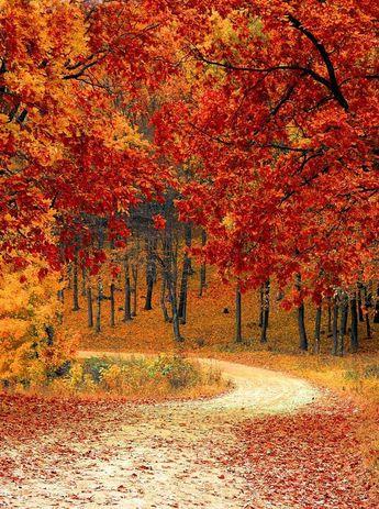 Autumn Driveway Orange Leaves Background Printed Backdrop - 6792