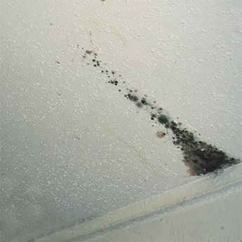 Poor ventilation in a bathroom can lead to mould on a ceiling. We offer a quick tip on how to get rid of mould and paint over the stain.