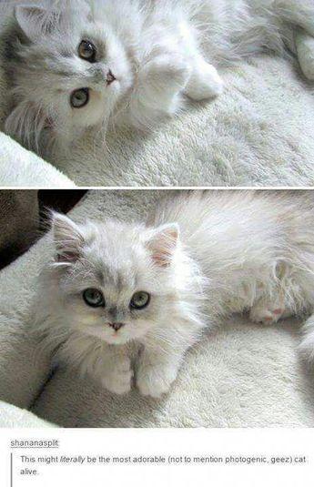 18+ Cutest Cat Memes