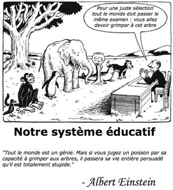 L'égalité dans le système éducatif, d'après Einstein ! - loisirette