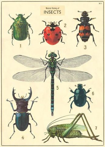 Cavallini & Co. Natural History Insects Decorative Paper Sheet