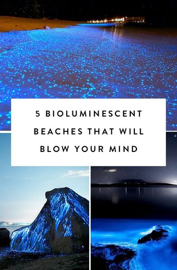 5 Bioluminescent Beaches That Will Blow Your Mind