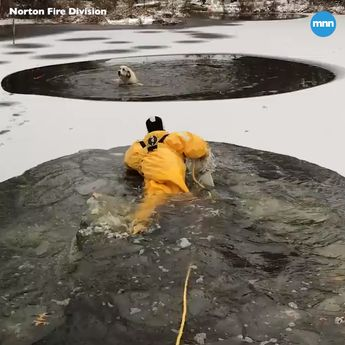 Dog saved from frozen river in dramatic rescue
