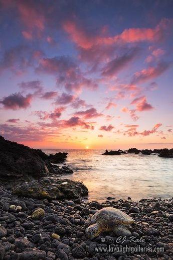 cj kale Hawaii #turtle #sunset