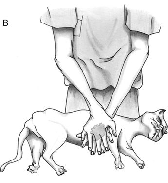 CPR for Dogs, Cats.