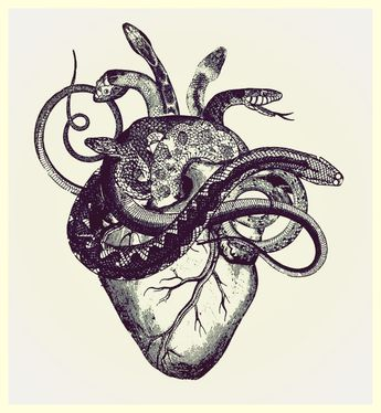 a combo of 2 of my favorite things to study... the cardiac system and snakes