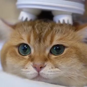 🤣A good massage is pure relaxation, inspiring body and soul💆‍♂️⠀ 📹 @hosico_cat⠀ -⠀ #cat #massage