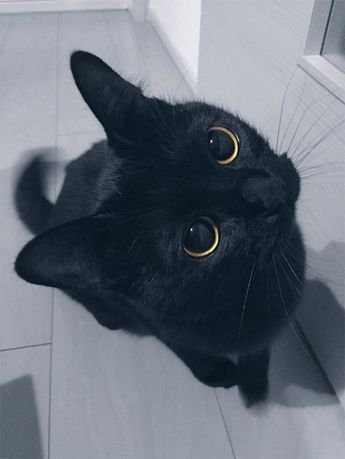 Help Protect Black Cats This Halloween
