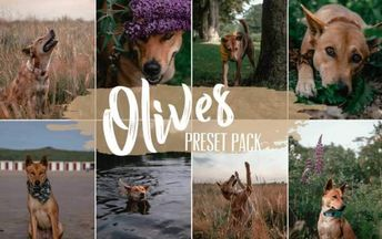 Top 12 Popular Presets for Pet Photography - Cherbear Creative