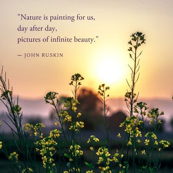 Inspiration from Nature | #naturequotes #quotes #positive #vibes #explore #outdoors #wildflowers #freespirit #traditionalmedicinals