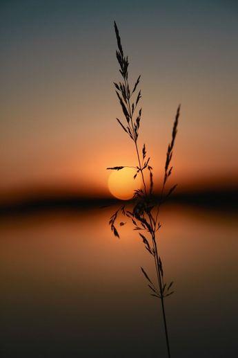 sunset            /