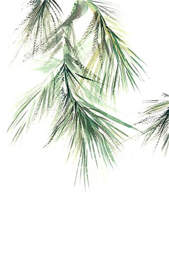Pine Tree Branch Watercolor #art #trees