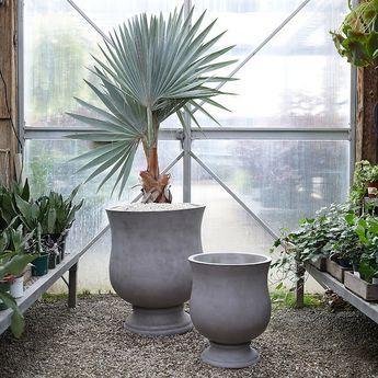 Botanicals With a Twist
