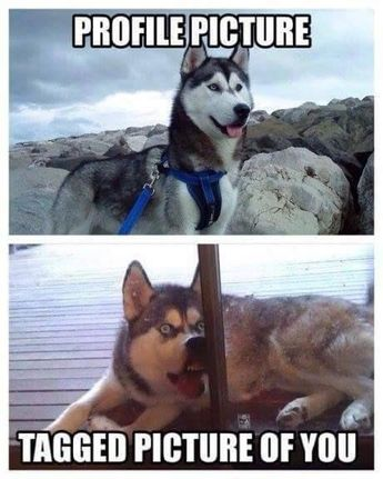 50+ Funny Husky Memes That Will Keep You Laughing For Hours #husky #huskymemes #dogmemes #memes #funnymemes