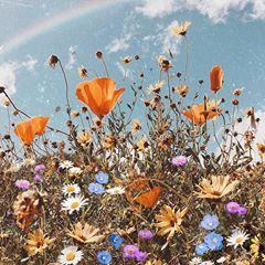На данном изображении может находиться: небо, растение, цветок, на улице и природа