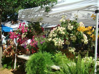Plants, produce, and a free art show @ The Palafox Market in downtown Pensacola~