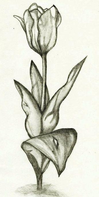 Sketsa Gambar Bunga Arsiran Koleksi Gambar Bunga