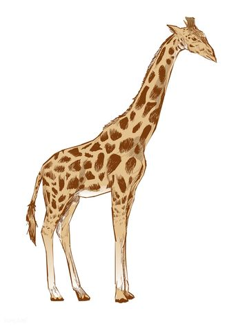 Illustration drawing style of giraffe | premium image by rawpixel.com