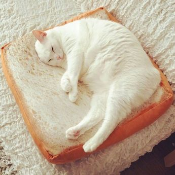 Comfy Bread Toast Cat Lounge Cushion/ Cat Bed