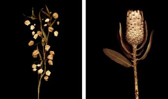 Joyce-Tenneson-Flower-Portraits | My-Contents-Have-Shifted