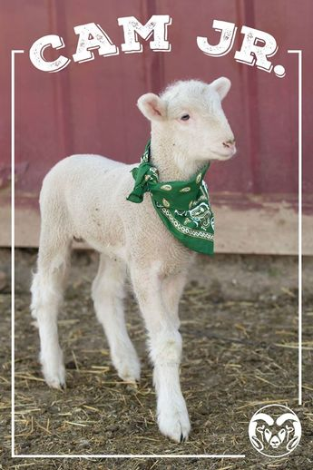 Rams, meet Cam Jr. No really. This is CAM's son.